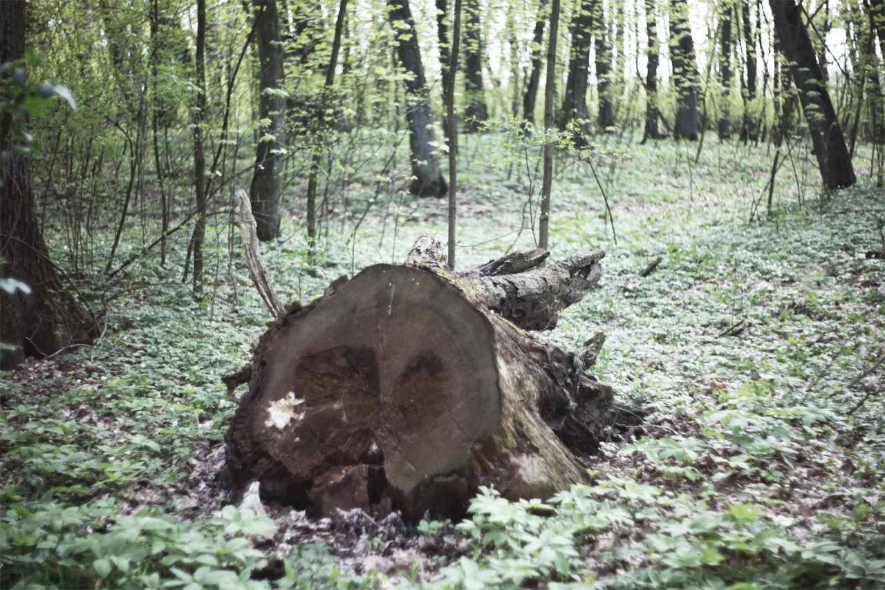pracownia architektury krajobrazu Opowieści o Lesie